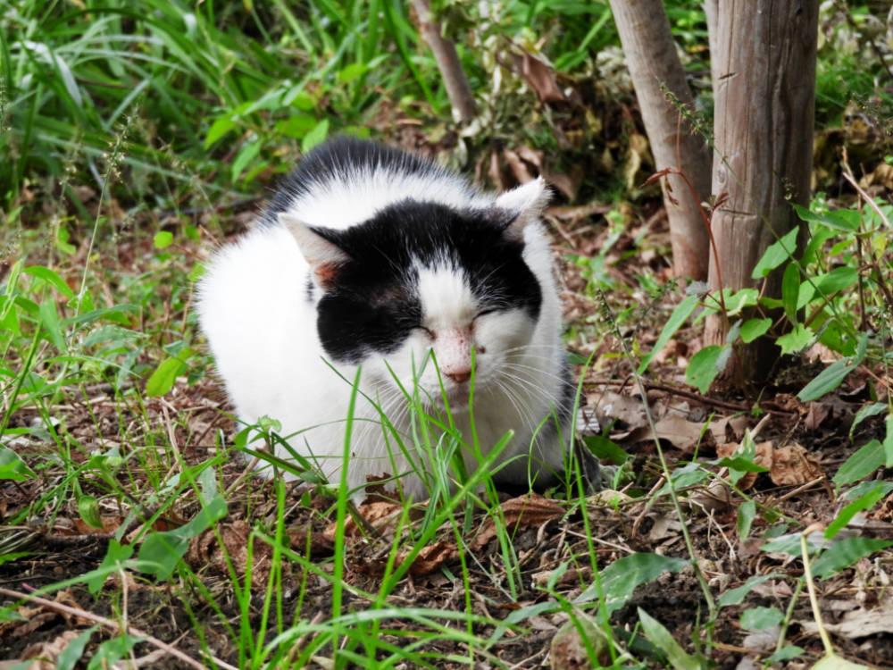 猫DSCN1383
