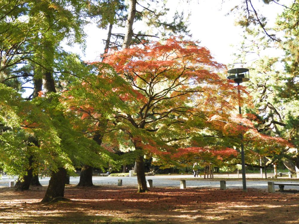 京都御苑DSCN2028