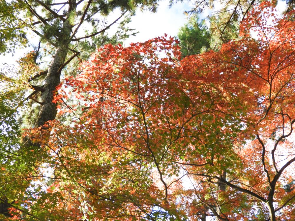 京都御苑DSCN2029