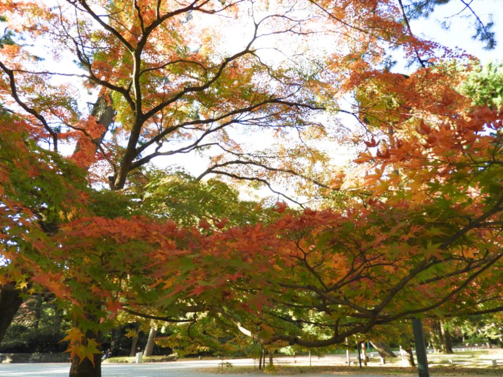 京都御苑DSCN2031