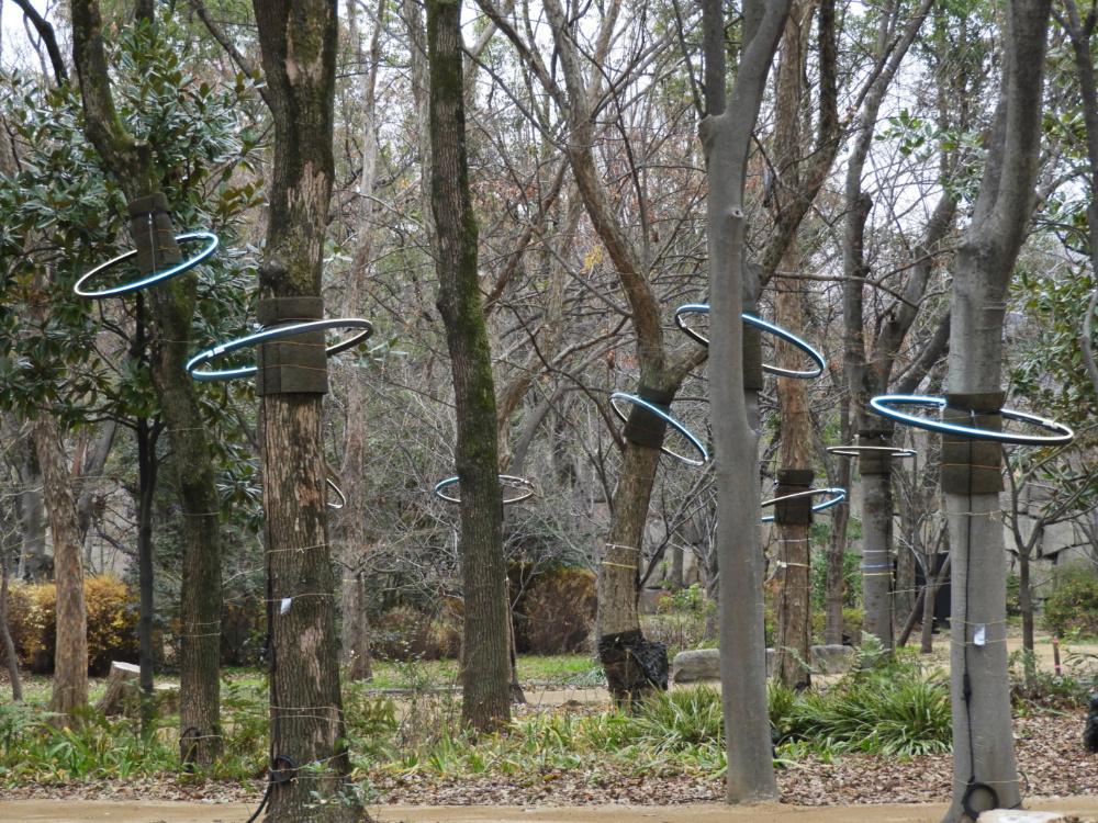 飛騨の森DSCN3239