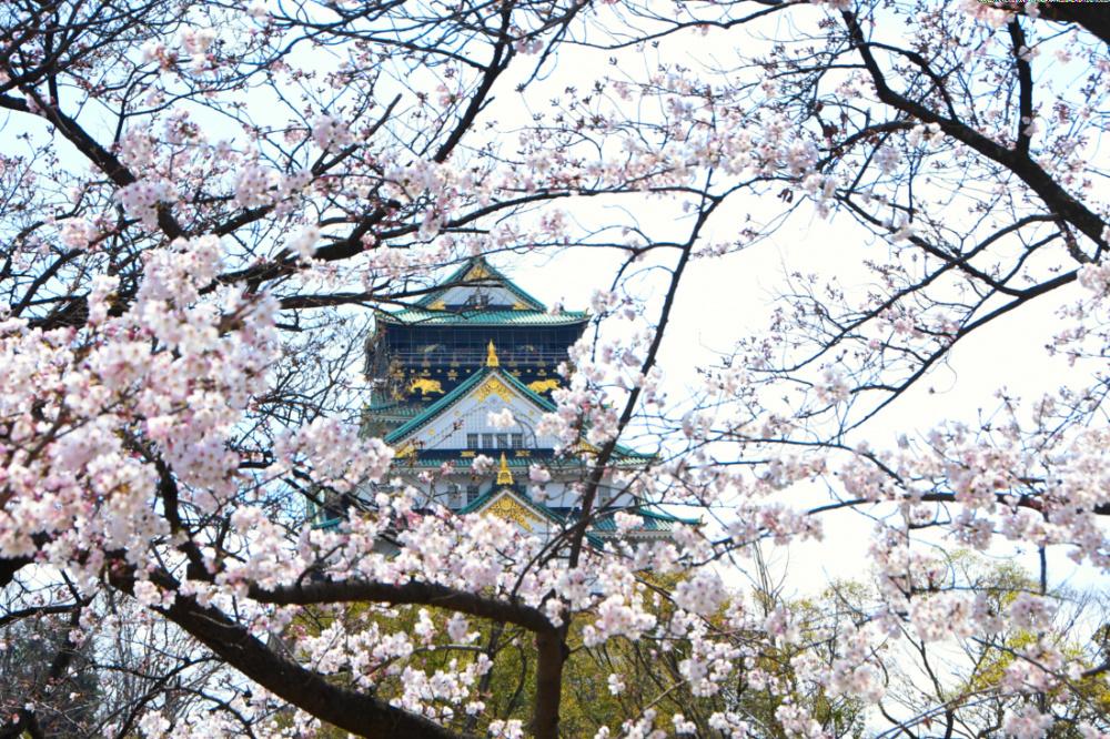大阪城DSC_4046
