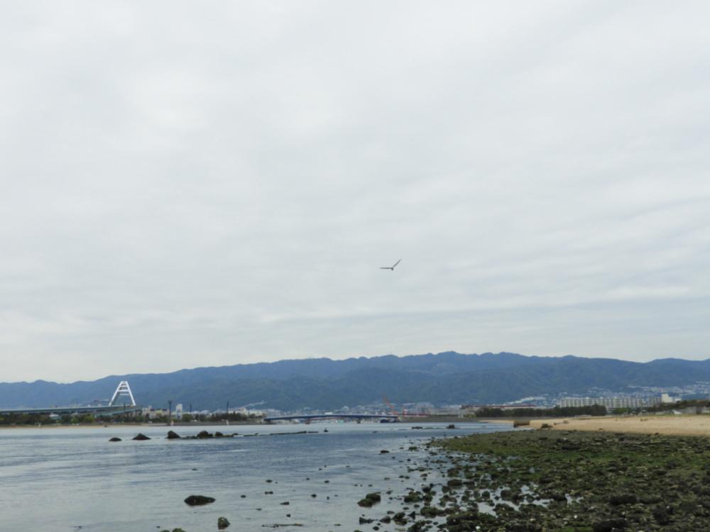 甲子園浜DSCN6378