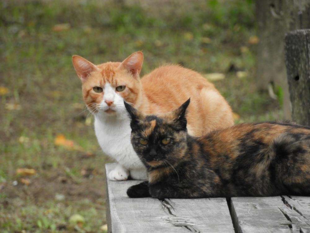 猫DSCN8829