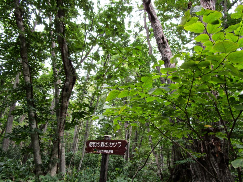 野幌森林公園IMG_0130
