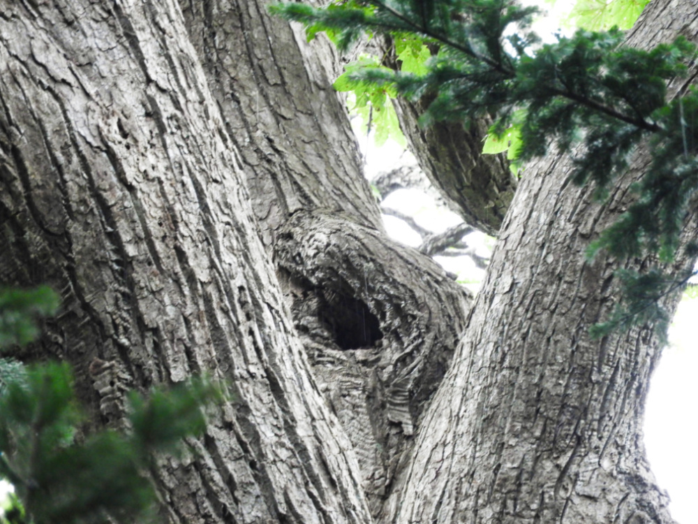 フクロウの穴DSCN9034