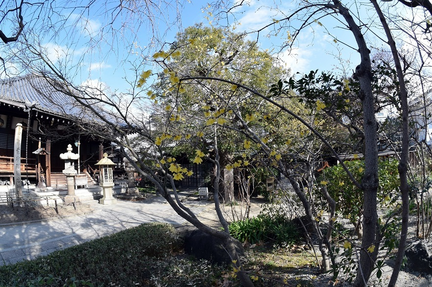 全興寺・真冬 (0)