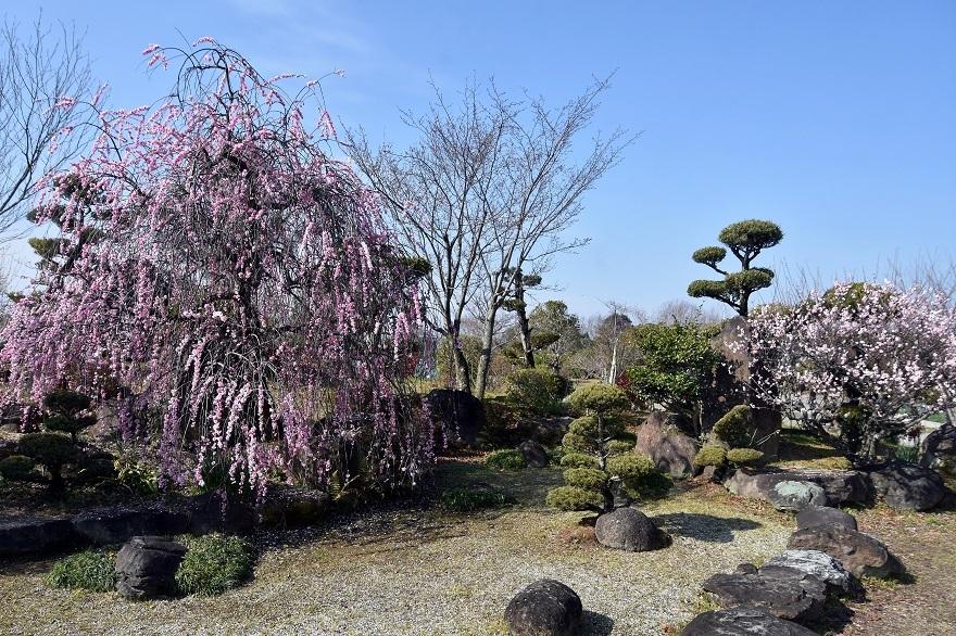 和泉・庭園19 (0)