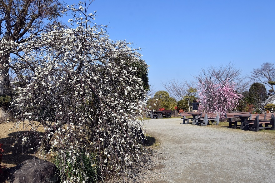和泉・庭園19 (1)