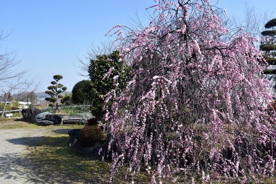 和泉・庭園19 (2)