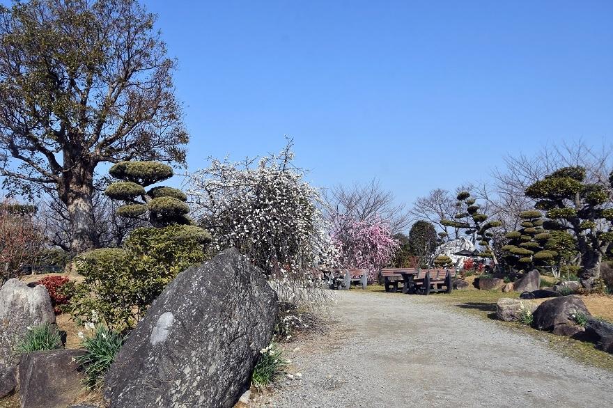 和泉・庭園19 (3)