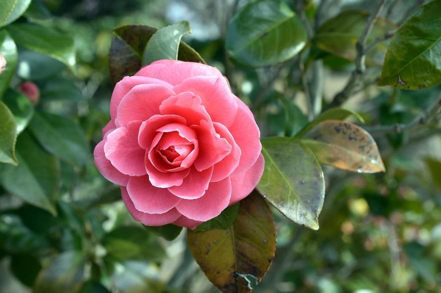 和泉・庭園19 (5)