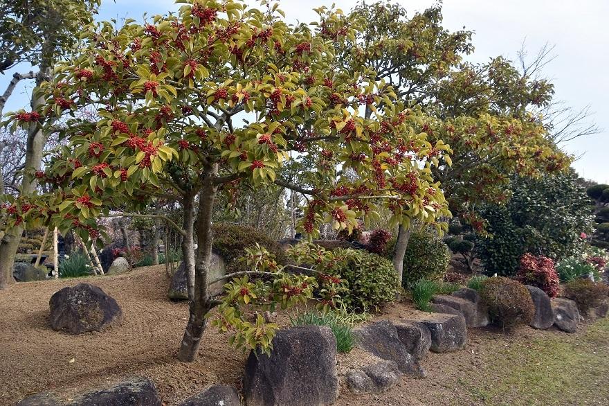 和泉・庭園19 (8)