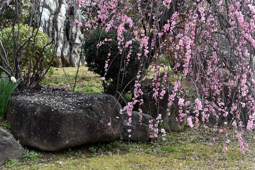 和泉・庭園19 (13)