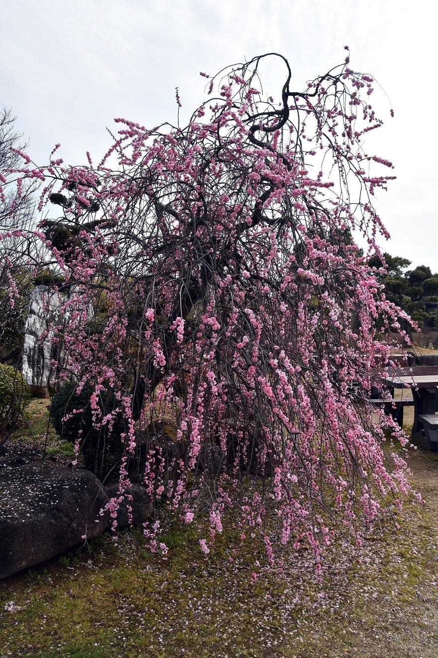 和泉・庭園19 (14)