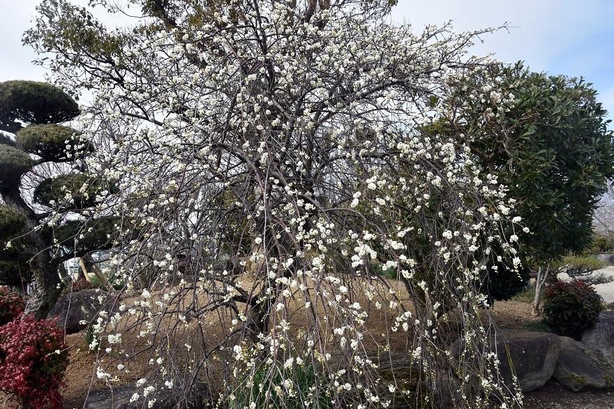 和泉・庭園19 (015)