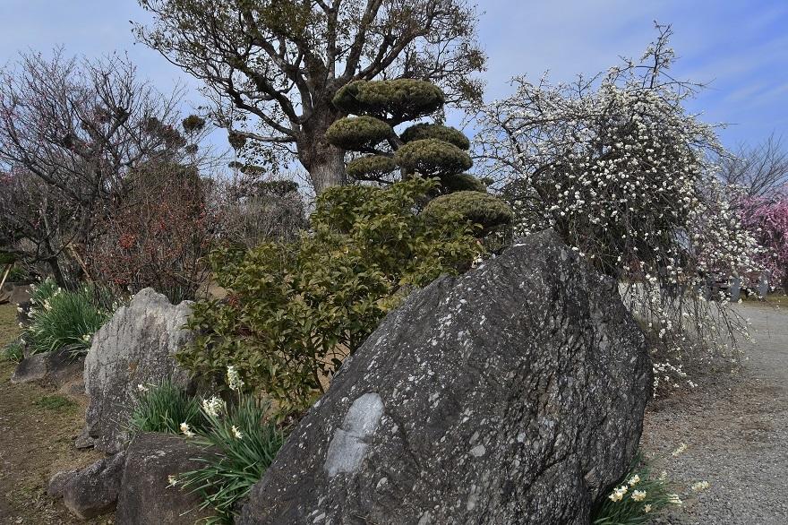 和泉・庭園19 (20)