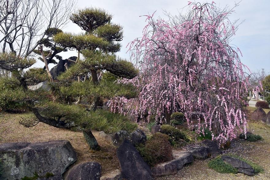和泉・庭園19 (21)