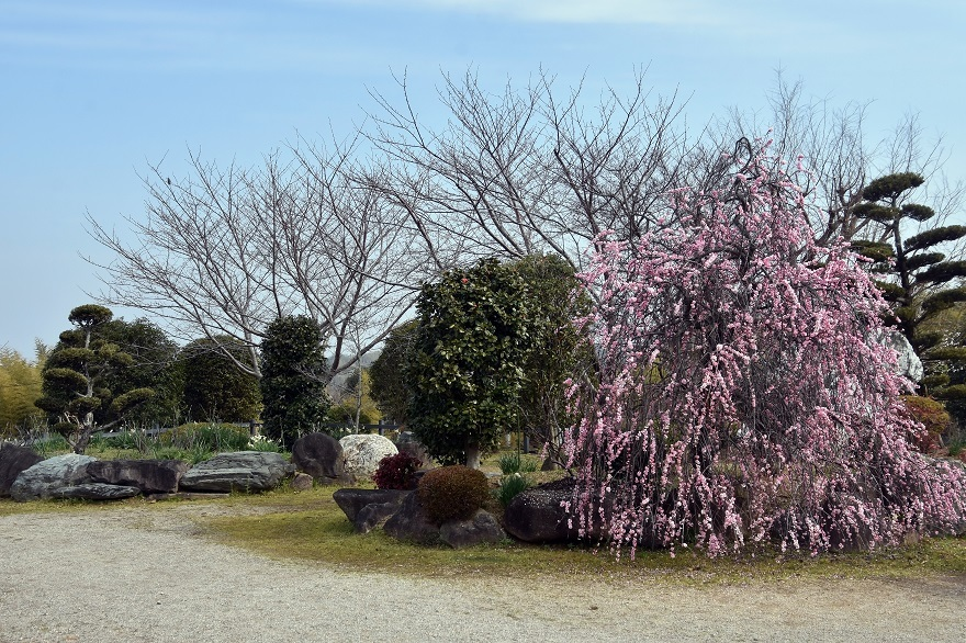 和泉・庭園19 (22)