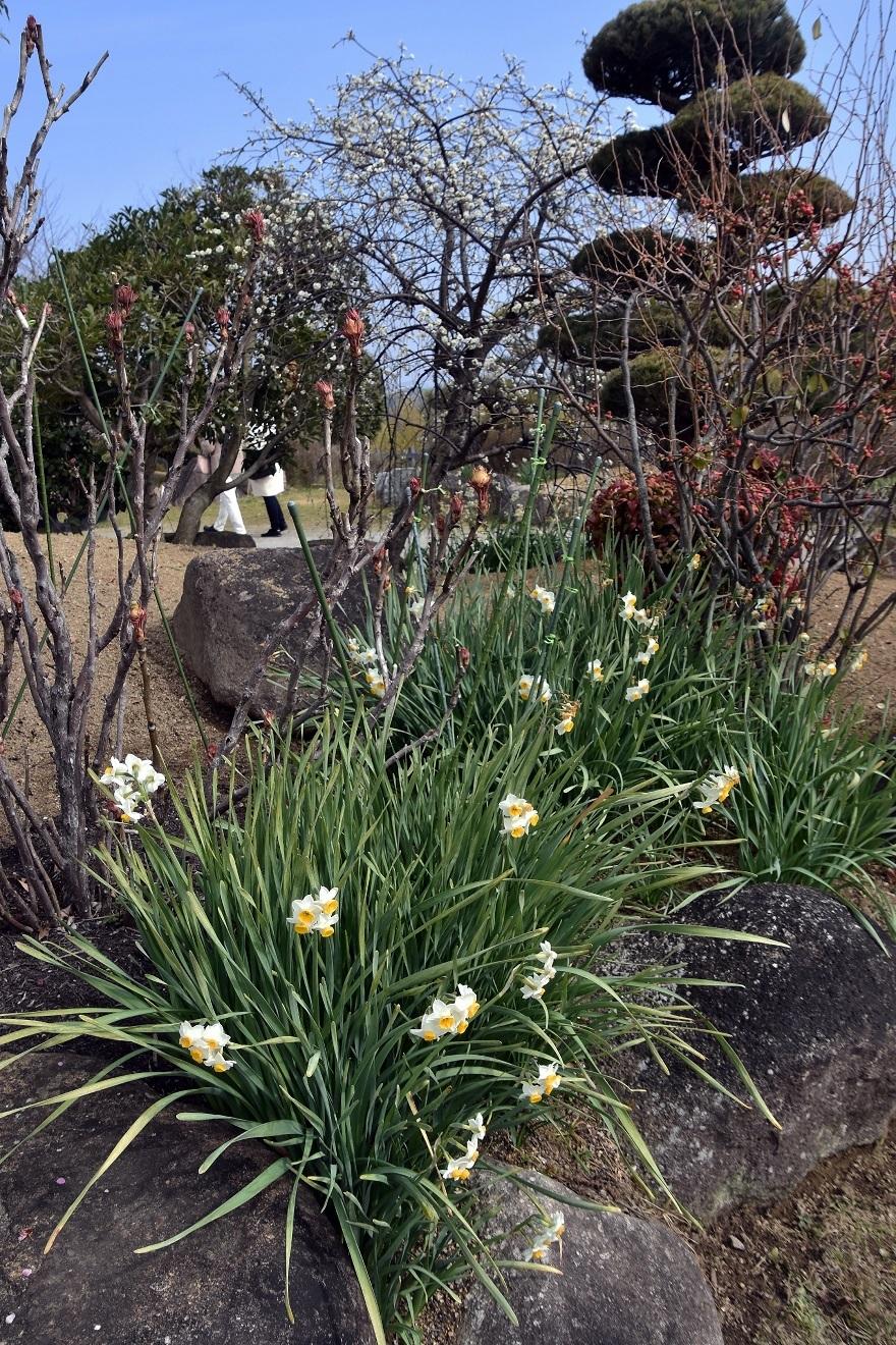 和泉・庭園19 (16)