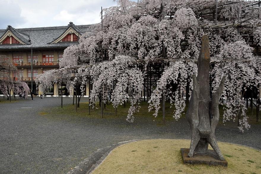 天理・枝垂れ桜 (4)