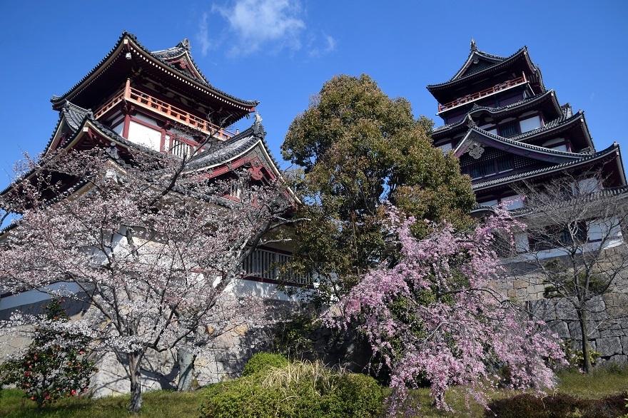 伏見桃山・桜19 (0)