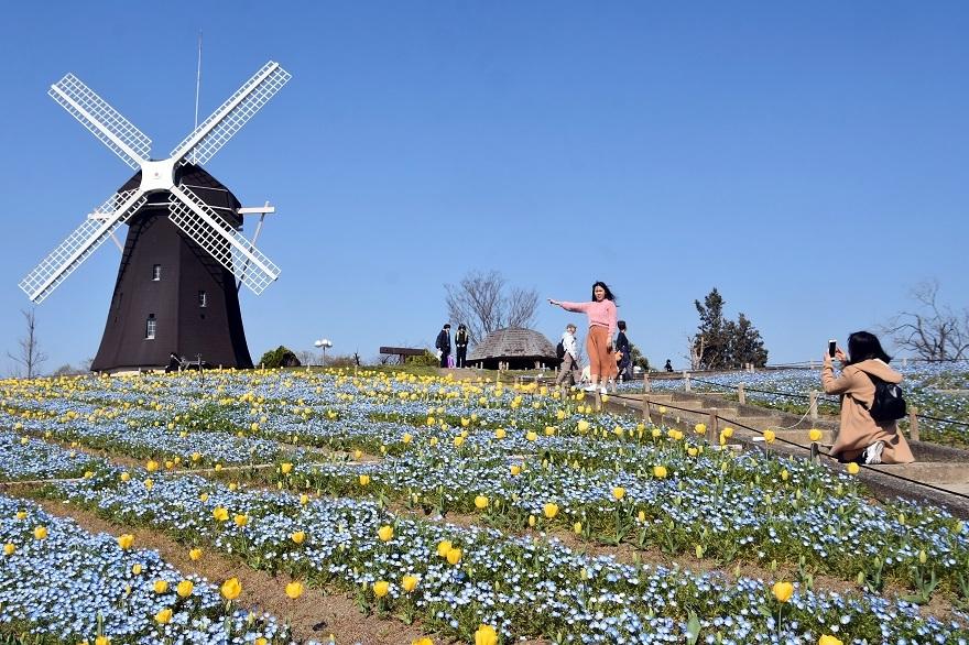 風車の丘19春・春(0)