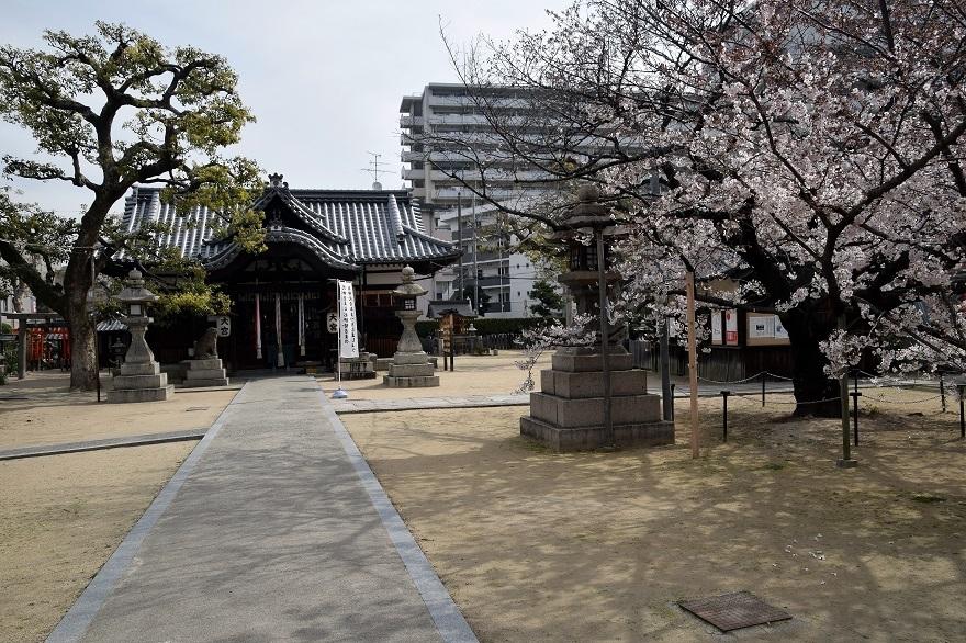 大宮神社・桜 (14)