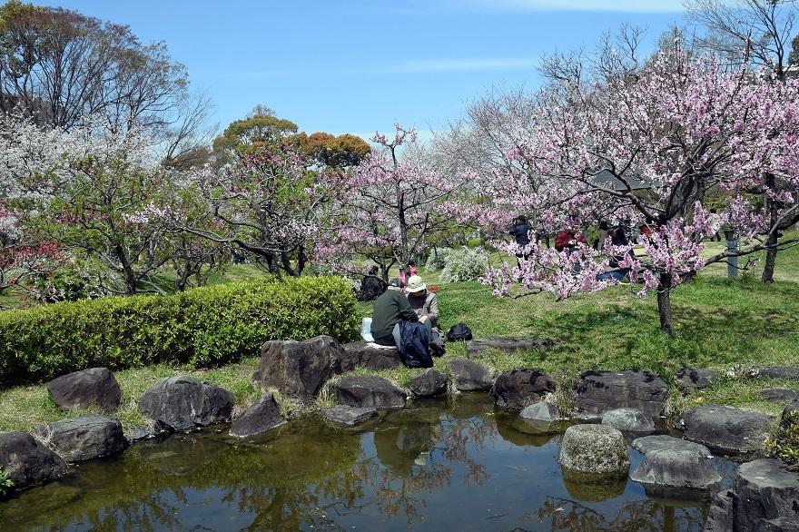 藤田邸の花桃19 (0)