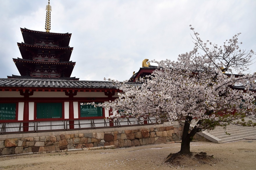 四天王寺・桜19 (0)