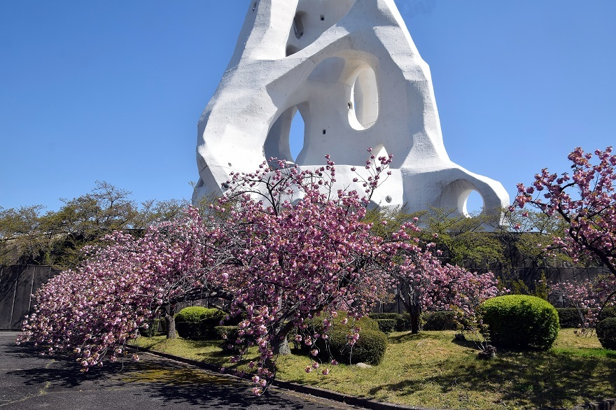 PLの塔・桜19 (0)