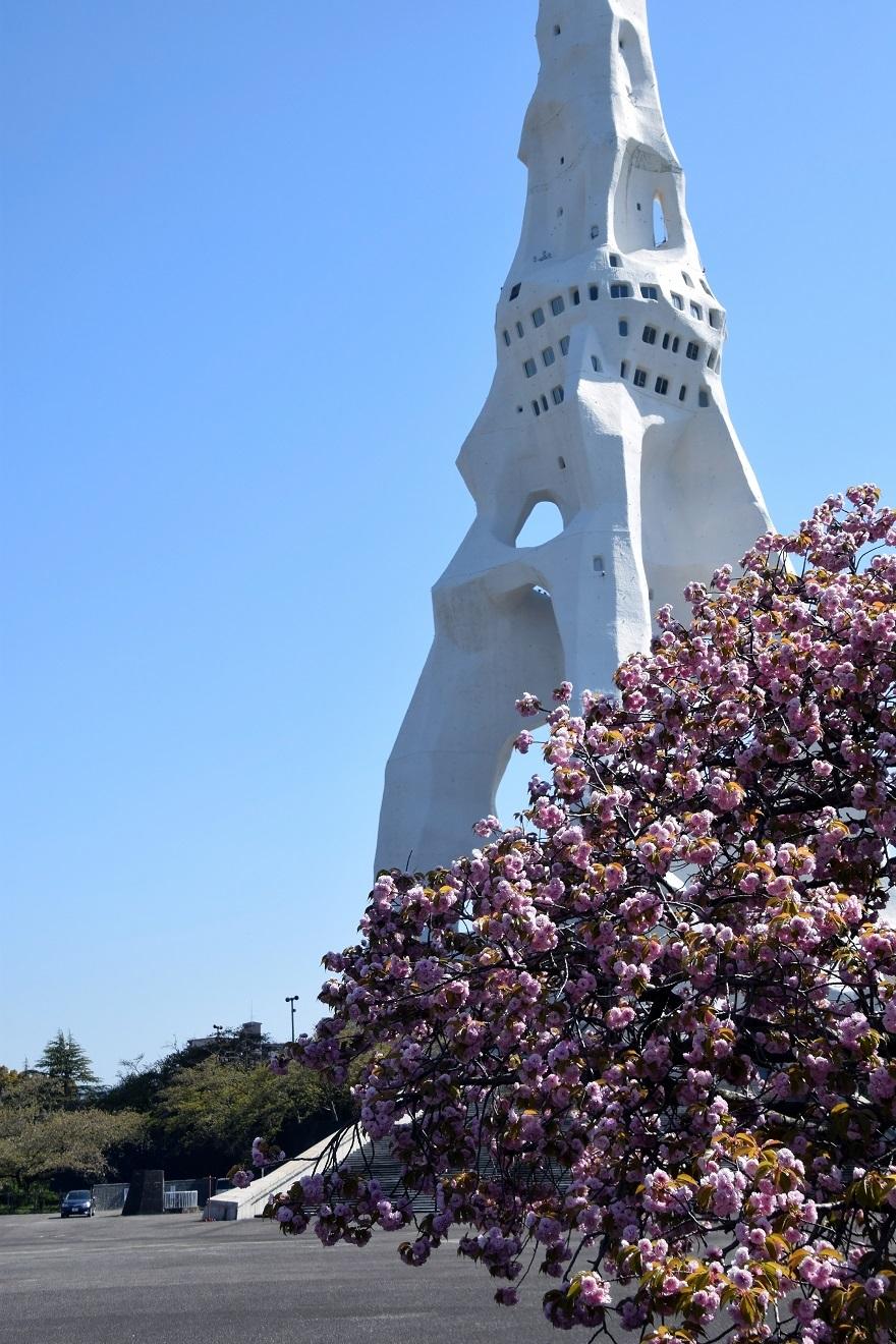 PLの塔・桜19 (1)
