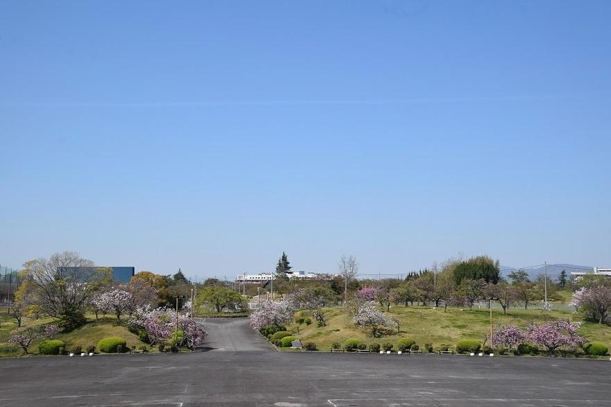 PLの塔・桜19 (10)