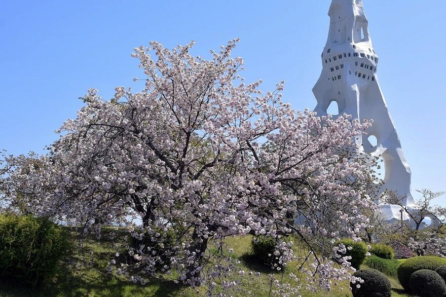 PLの塔・桜19 (12)