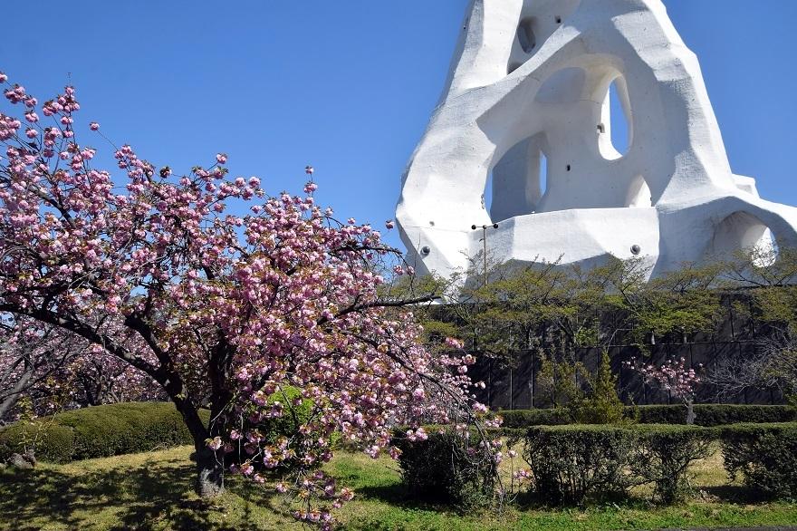 PLの塔・桜19 (13)