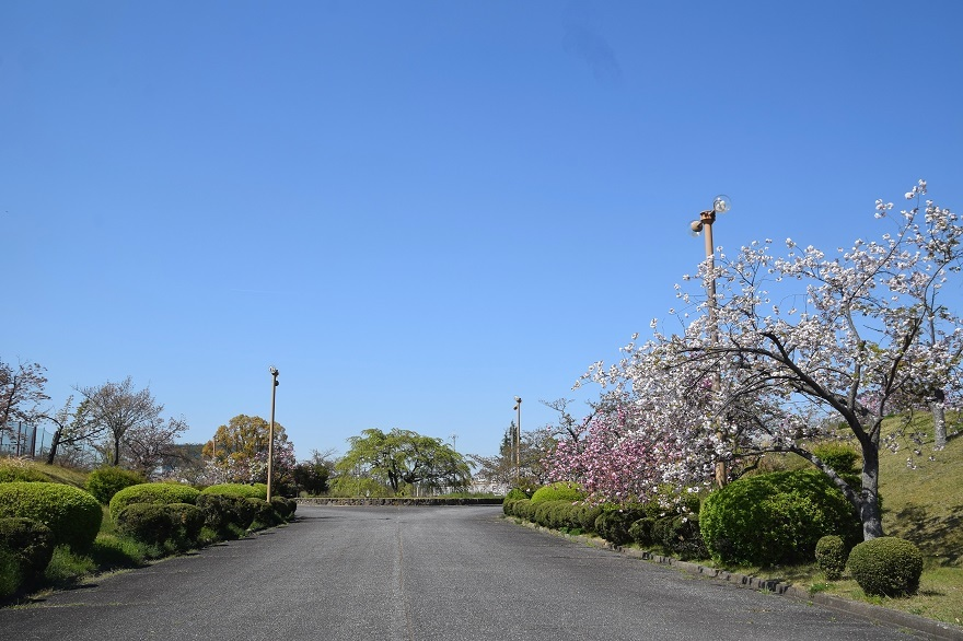 PLの塔・桜19 (17)