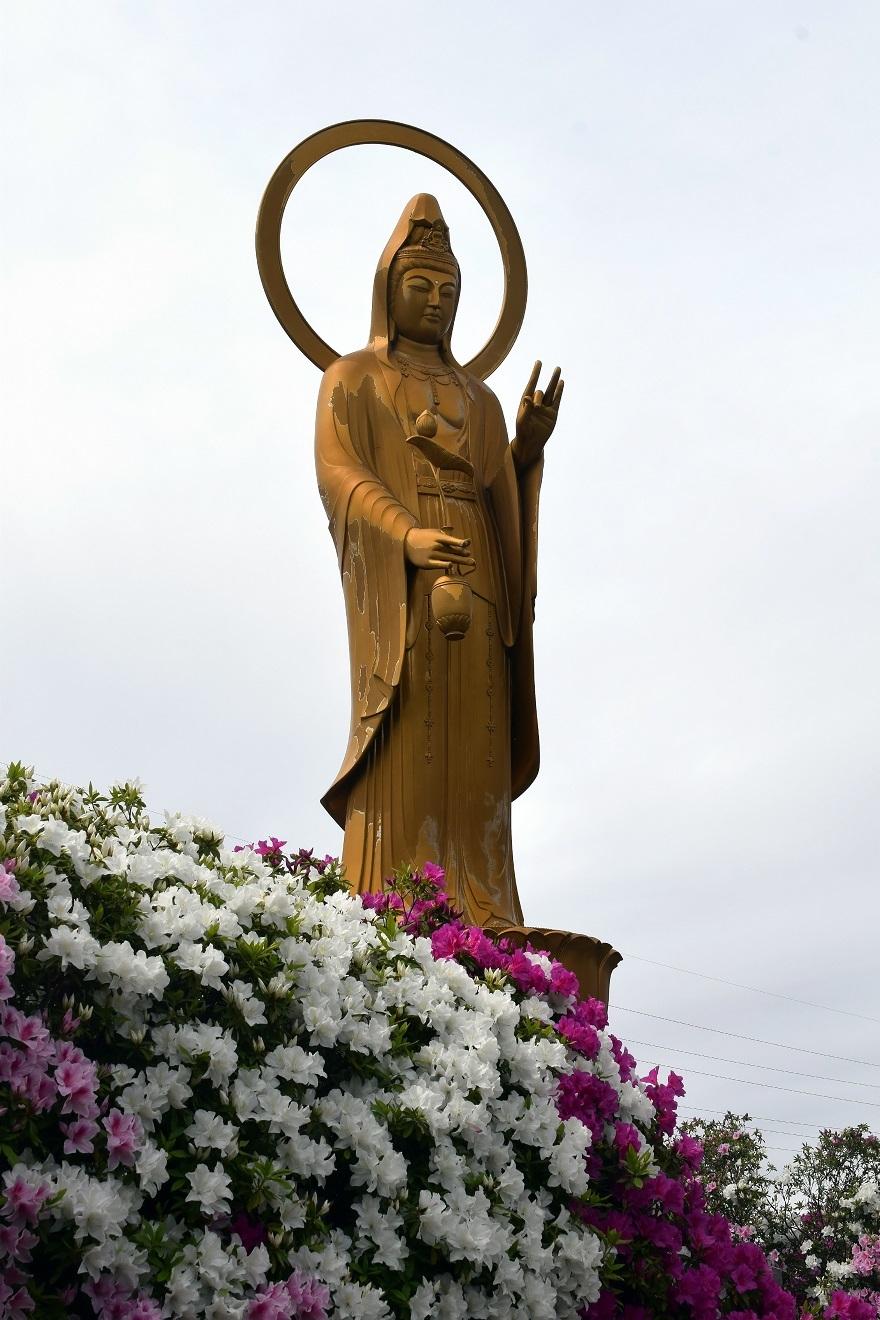 法雲禅寺の躑躅19 (0)