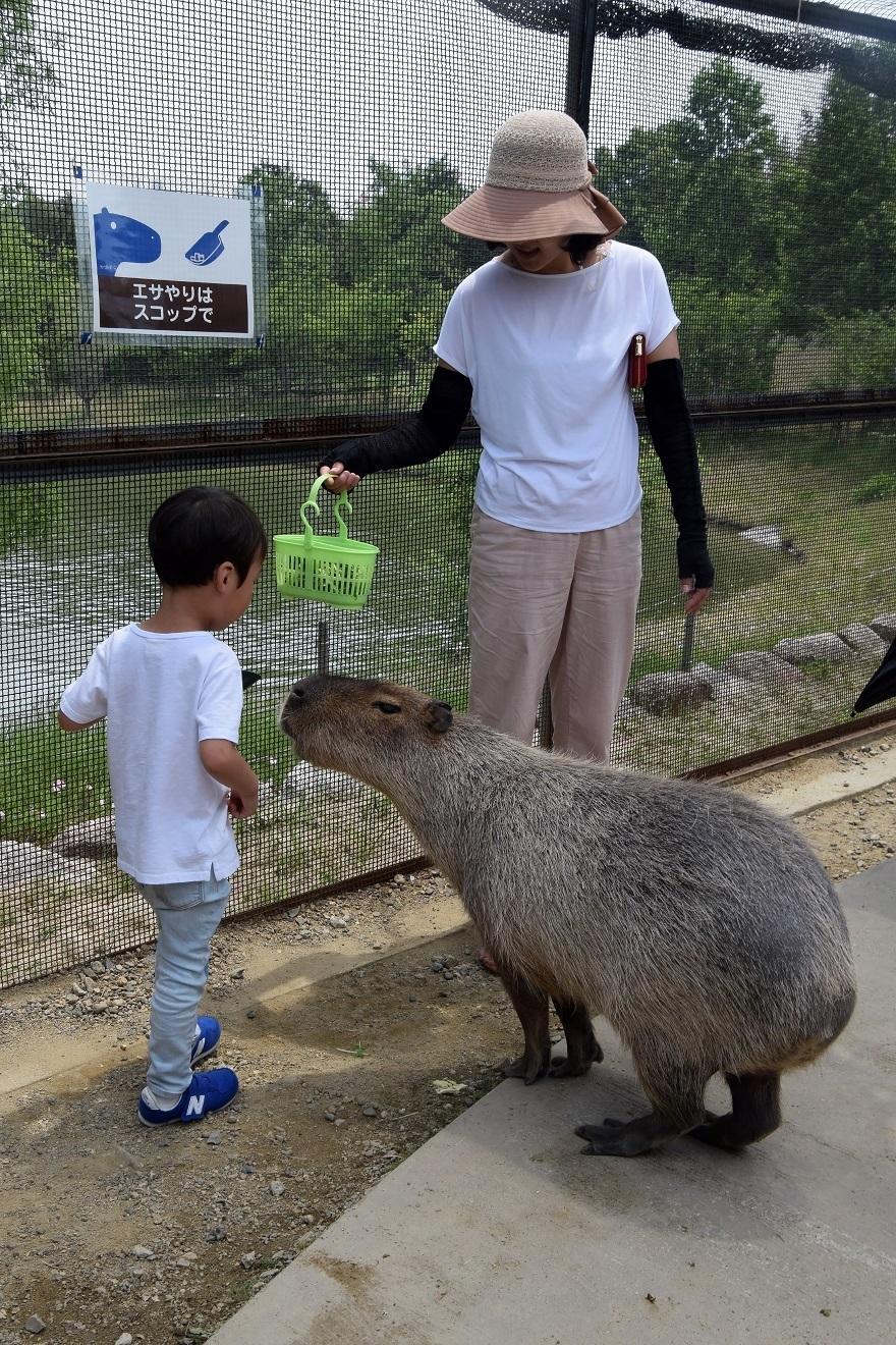 堺・動物達 (2)