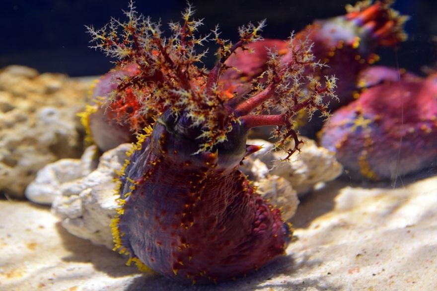 ニフレル・海洋生物19 (0)