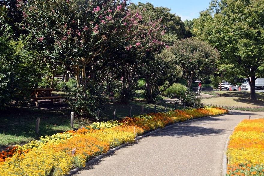 長居植物園・10月(17)