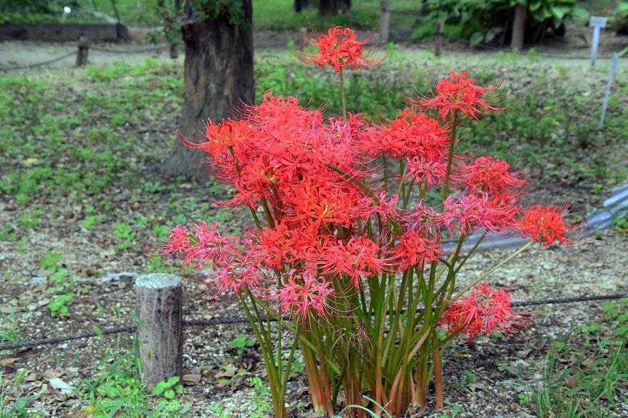京都植物園19#1 (7)