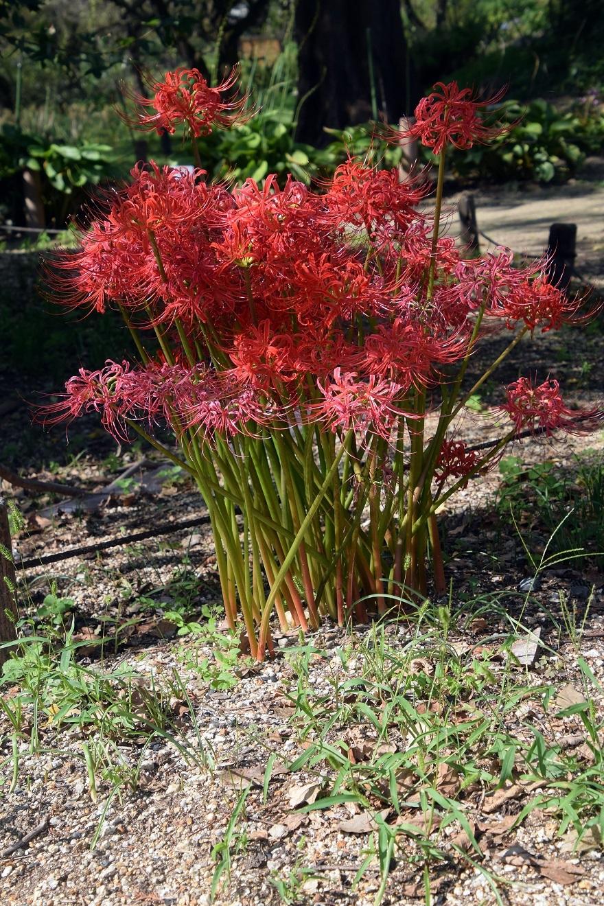 京都植物園19#1 (6)
