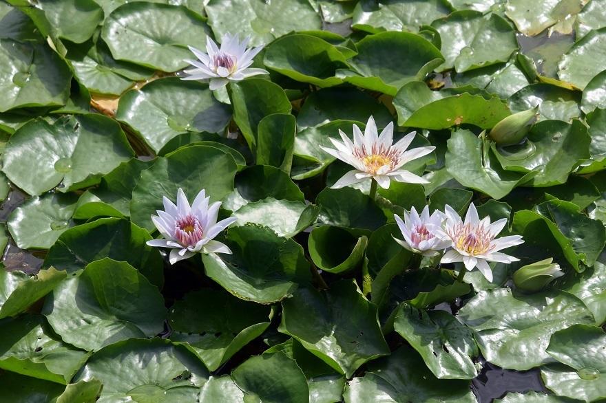京都植物園19#1 (28)