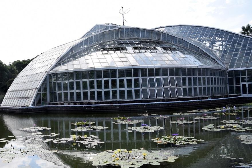 京都植物園19#2 (0)