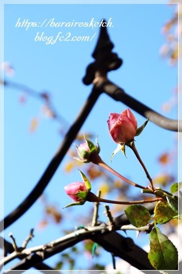 ホーム&ガーデン201901-12