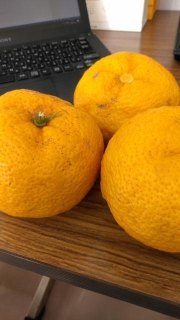 今年の柚子 (360x640)