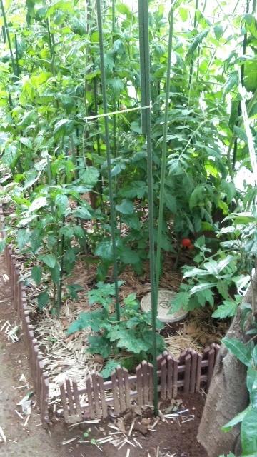 ?ジャングル (360x640)