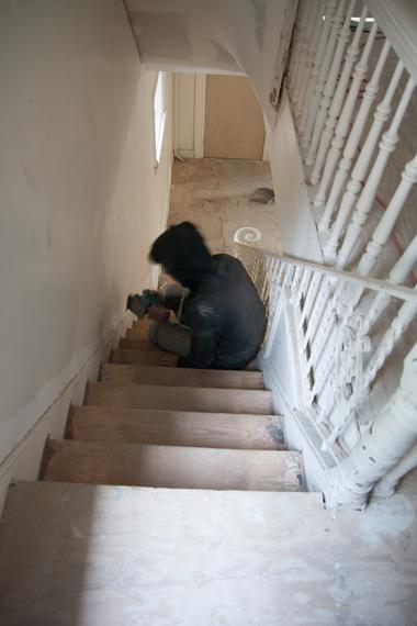 階段を削るシャミお