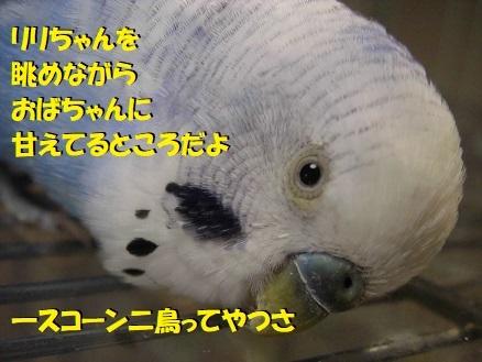 1scone2birds.jpg