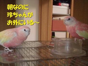 CIMG3919.jpg